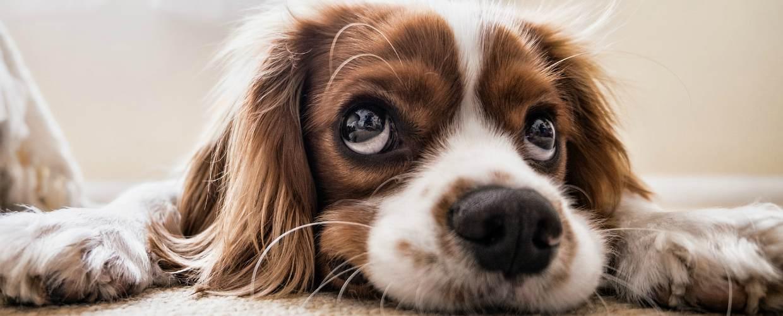 Новый закон о собаках в 2019 году – правила выгула и содержания