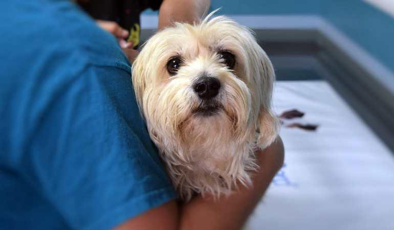 Обязательное чипирование животных – закон в 2020 году будет принят