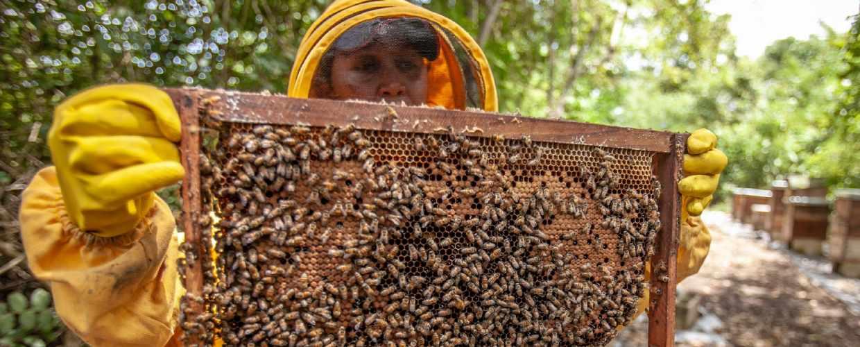 Новый закон о пчеловодстве в 2021 году в России – где можно содержать пчел?